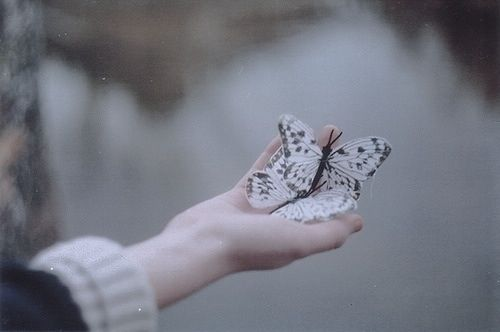 Butterflies in the palm of a hand