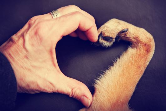 7 Things My Dog Has Taught Me