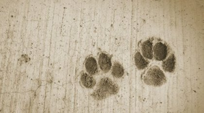 pawprints-2-420x234