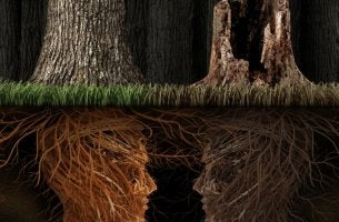 Roots the Same, Trees Different