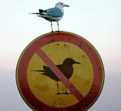 bird-on-no-birds-sign