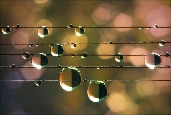 Close-up of water droplets on wires