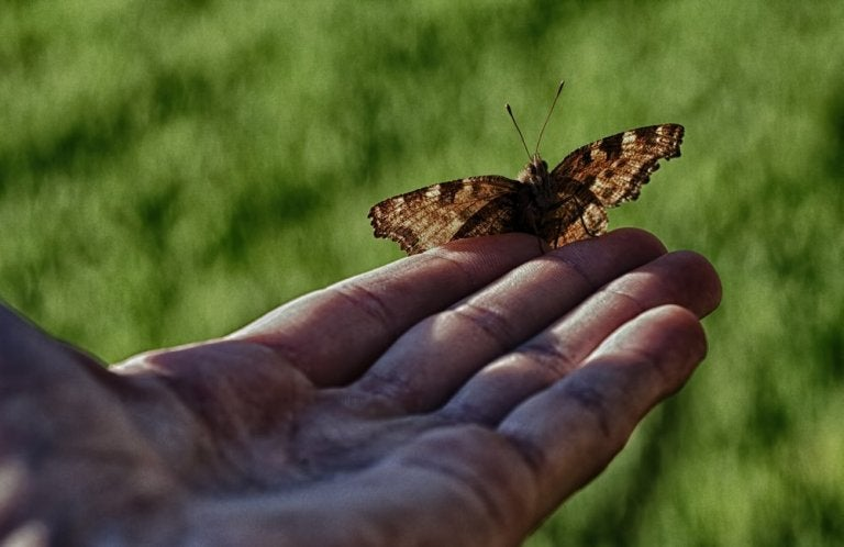 The Man and the Butterfly: When Helping Doesn't Help