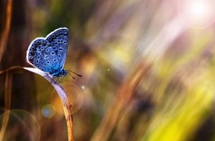 Close up of blue butterfly landed on blade of grass