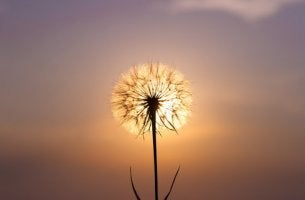 Dandelion with the sun behind it