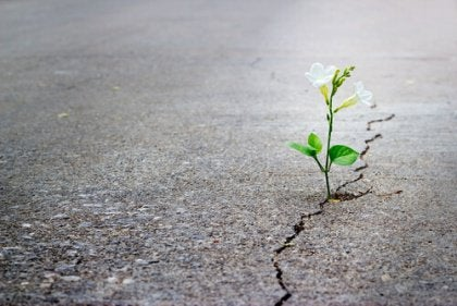 flower growing through crack
