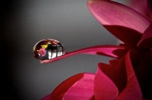 flower with droplet