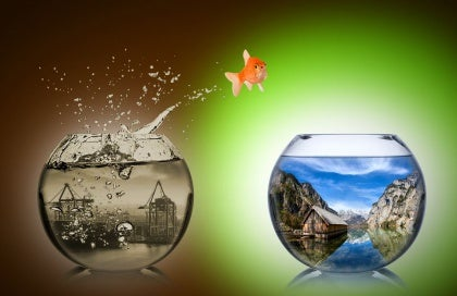 goldfish jumping to another fishbowl