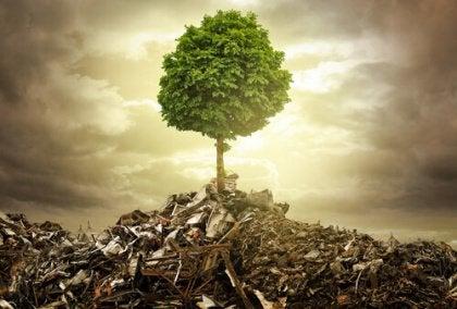tree in rubble