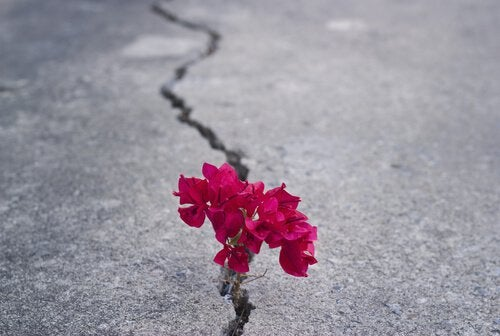 pink flowers in pavement crack men