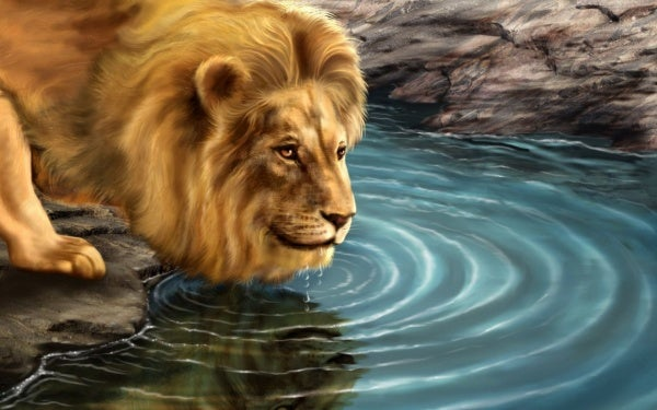 The Lion and His Reflection