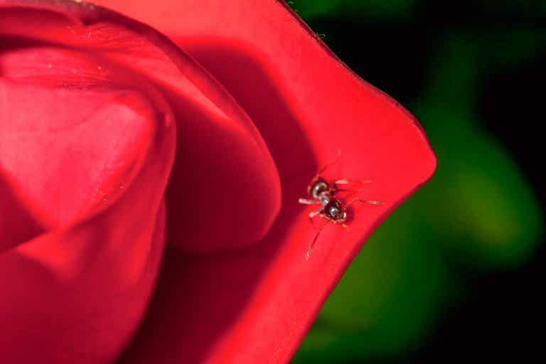 The Rose and The Toad: Inferiority and Superiority Complexes
