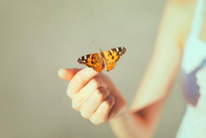 Orange Butterfly on Finger