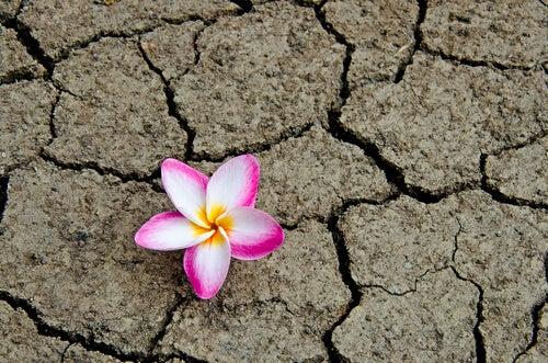 flower dry dirt