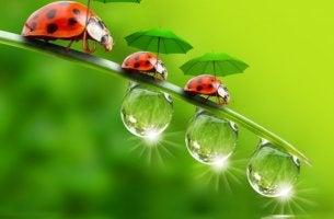 lady bug discipline
