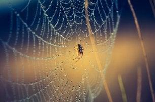 spider growth