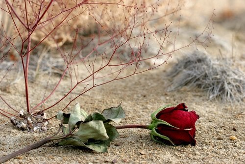 wilted rose sand