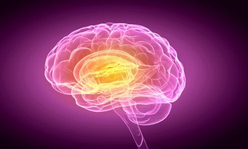 human brain indecisive