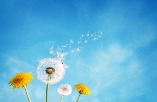 dandelions and sky present