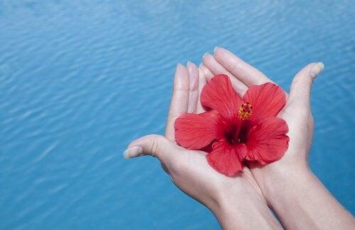 Gratitude: The Secret Ingredient