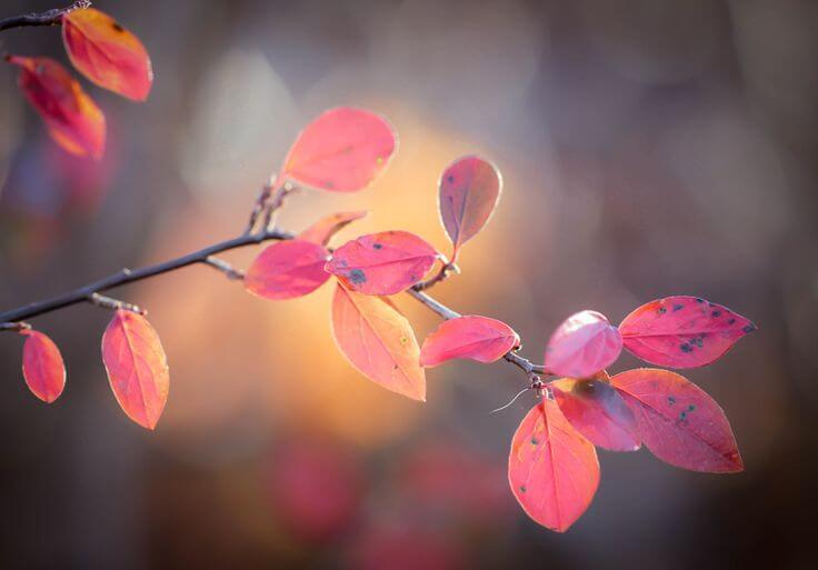 branch fall