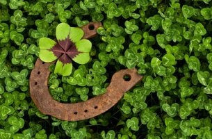 horseshoe in clovers lucky