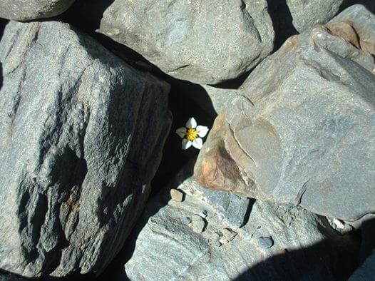 flower in rocks