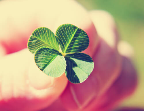 four-leaf clover lucky