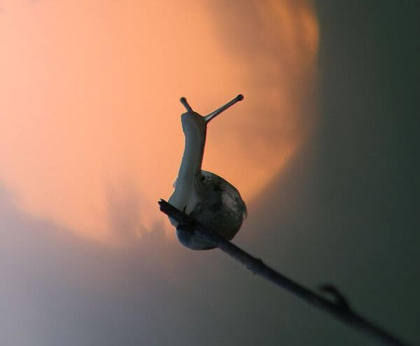 Snail on Stick