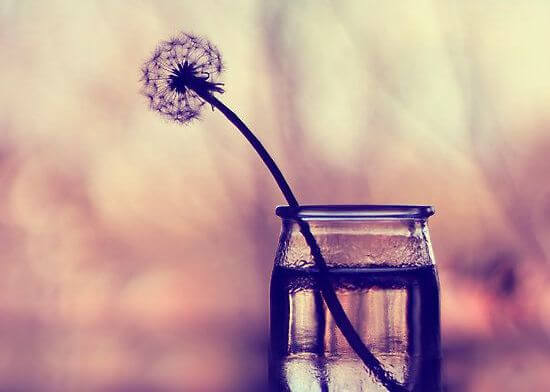dandelion in a glass jar