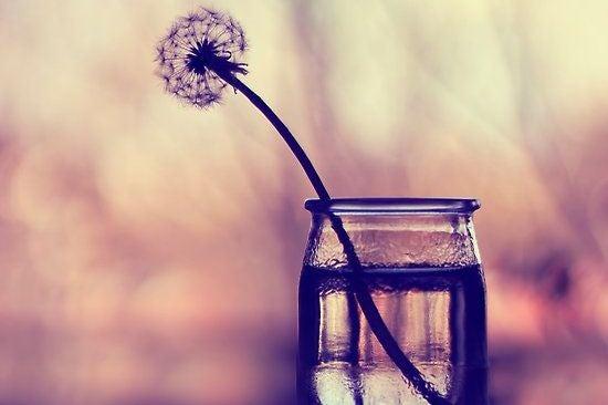 dandelion in glass representing silence