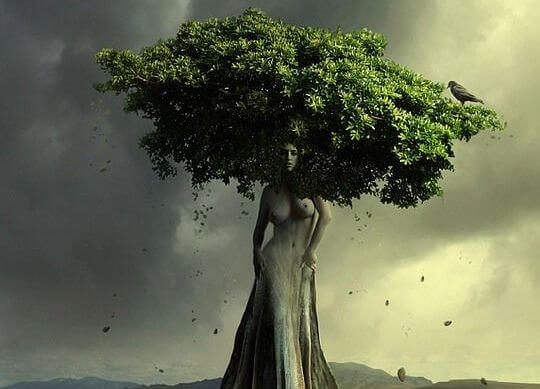 tree in the shape of a woman