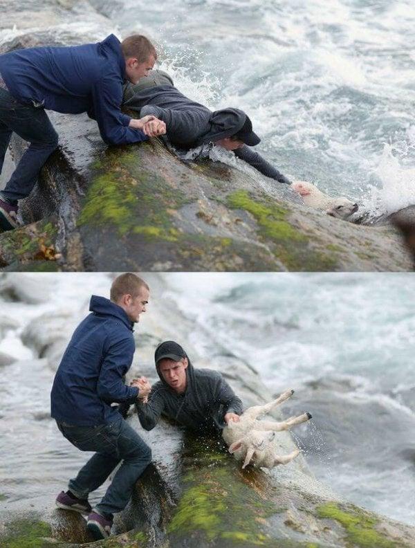 boys rescuing lamb