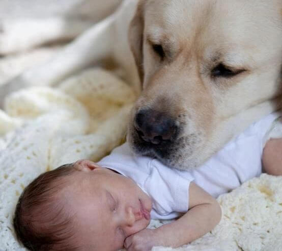 dog resting head on baby