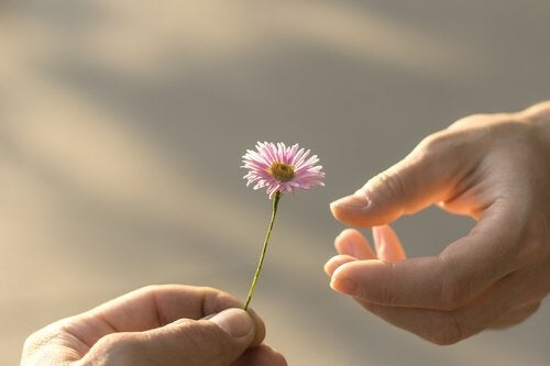 hand giving a flower to the other as a symbol of forgiveness