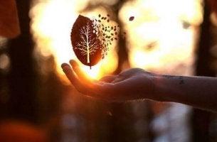 leaf floating above hand