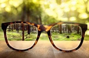 Landscape Through Glasses