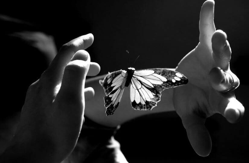 butterfly between two hands