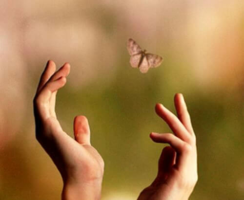 hands trying to reach a butterfly