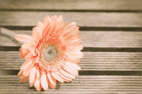 Flower on Wooden Floor
