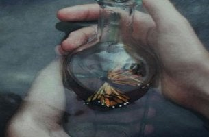 butterfly in a jar