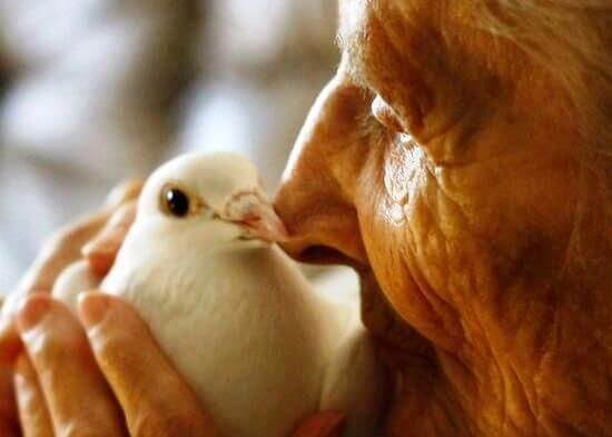 elderly caregiver with pidgeon