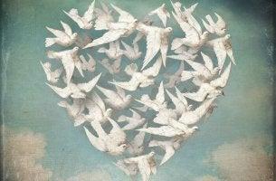 heart of white doves