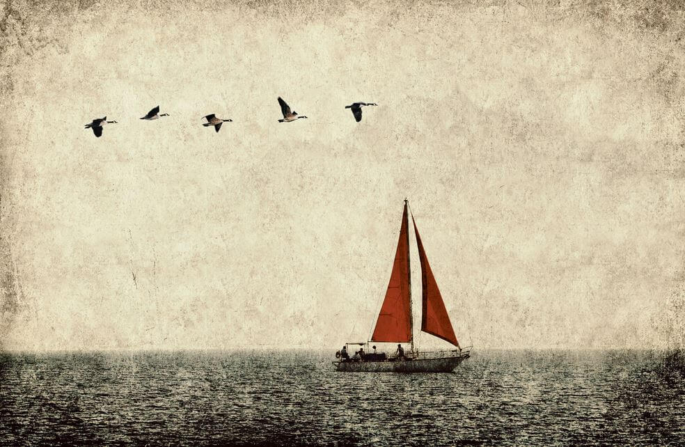 sailboat and birds