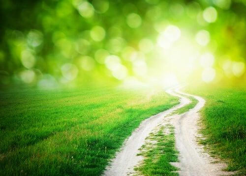 Grønn vei