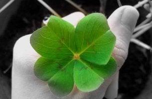 luck four leaf clover