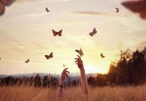butterflies-e1464042178519