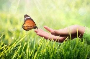 butterfly-on-a-fingertip