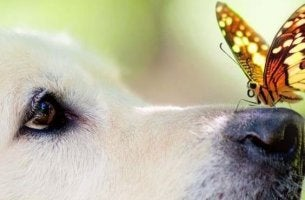 butterfly-on-dogs-nose