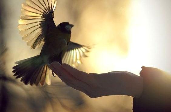 새를 날리는 손